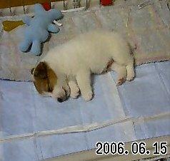 2006_6_15lucky1