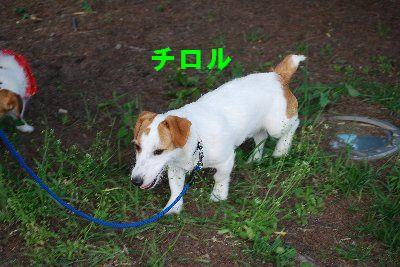 2012_07_01_29
